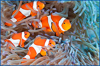 marine-life stock images