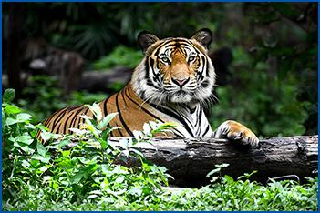 world-wildlife stock images